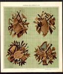 7718 Dit zijn twee bijlages uit het tijdschrift: 1. vier bruine gecombineerde themaborduurpatroontjes. 2. Een geel vel ...