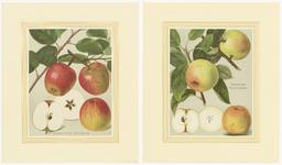 583 Twee chromolitho's van de appelsoorten, Geheimrat Dr. Oldenburg en Steirischer Marschanzker, met beschrijvingen en foto's