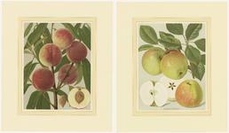 856 Twee chromolitho's van twee fruitsoorten, de abrikoos en de appelsoort James Grieve, met beschrijvingen en foto's