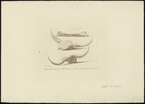 871 [Overstroming in het Gelders Rivierengebied in het jaar 1809]