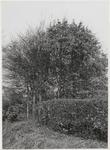 M 11898 Een weesje in Aalst