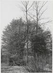 M 11899 Een weesje in Aalst