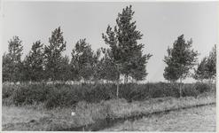 M 11907 Bomen in het veld