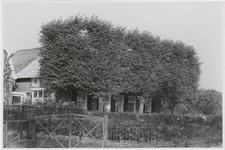 M 11911 Platgeknipte linden voor een dwarshuis, boerderij