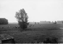 2-15051 [1975-1985]