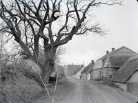 3-278 De grillige boom , woningen aan de dijk