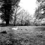 19-1627 Hertenkamp