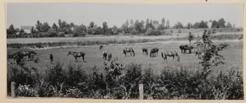 04_007_L_02 Stoeterij De Rietschoof, paarden in de wei