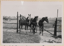 04_007_R_03 Drie merrie jaarlingen: Flying Britje, Colnika en Liberty Belle