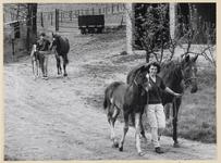 11_004_R_01 Van Links naar rechts de paarden Love in a mist, Commando Patrol, Ragged Robin en Yellow Rose